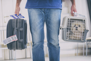 Is It Safe For My Pet To Travel In An Airplane?