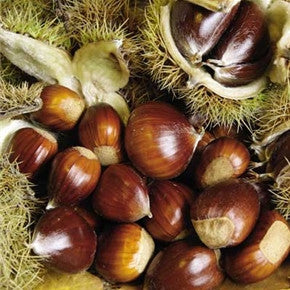 Chinese Chestnut Tree (2 Pack)