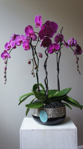 Deluxe Pink Phalaenopsis Orchids