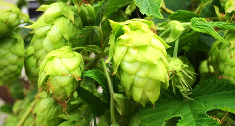 Know When to Pick Your Hops