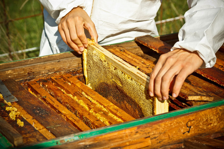 6 Reasons Raw Honey Belongs in Your Paleo Diet