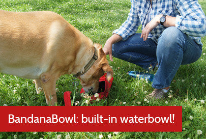 pet bandana with built-in waterbowl