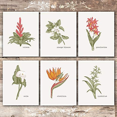 Vintage Botanical Wall Art Prints (Set of 6) - Unframed - 8x10s | Flower Wall Art - Dream Big Printables