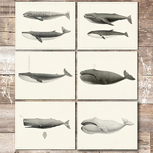 Vintage Whales Wall Art Prints (Set of 6) - Unframed - 8x10s | Beach Decor - Dream Big Printables