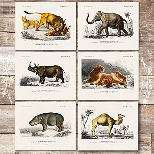 Vintage Exotic Animals Art Prints (Set of 6) - Unframed - 8x10s - Dream Big Printables