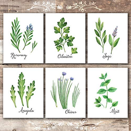 Kitchen Herbs Art Prints (Set of 6) - Unframed - 8x10s | Botanical Prints Wall Art - Dream Big Printables