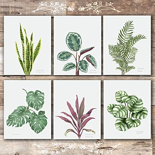 Tropical Leaves Wall Art Set Of 6 Unframed 8x10s Botanical Prints Dream Big Printables What's included 6 large files 300dpi in the following sizes. tropical leaves wall art set of 6 unframed 8x10s botanical prints