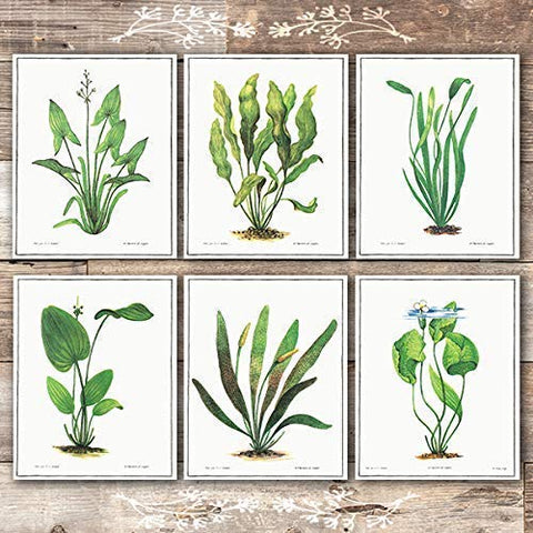Vintage Aquatic Plants (Set of 6) - Unframed - 8x10s