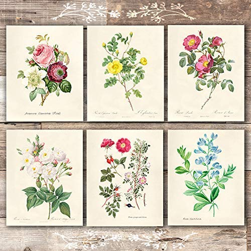 Vintage Roses Wall Art Prints (Set of 6) - 8x10s | Botanical Decor - Dream Big Printables