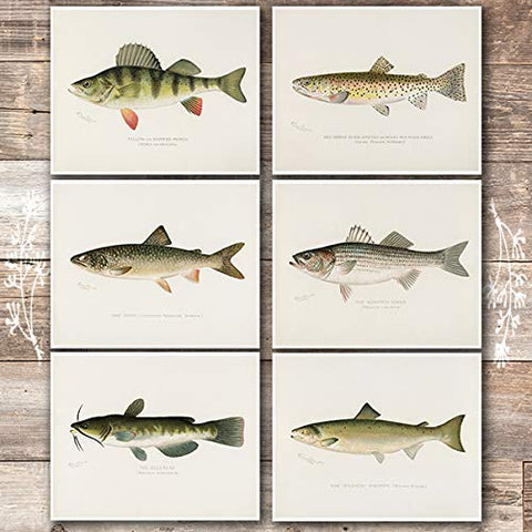 Fish Wall Art Prints (Set of 6) - Unframed - 8x10s | Vintage Fishing Decor