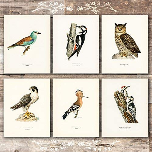 Vintage Bird Art Prints (Set of 6) - Unframed - 8x10s - Dream Big Printables