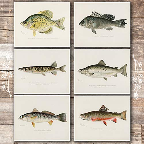 Vintage Fish Wall Art Prints (Set of 6) - Unframed - 8x10s | Fishing Decor - Dream Big Printables