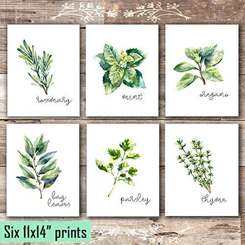 Kitchen Herbs Art Prints - Botanical Prints (Set of 6) - Unframed - 11x14s - Dream Big Printables