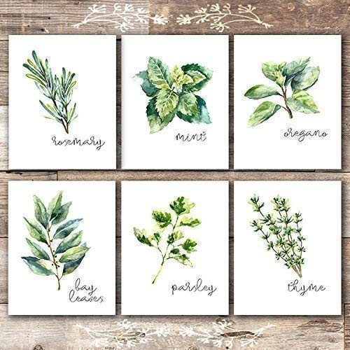 Kitchen Herbs Art Prints - Botanical Prints - (Set of 6) - Unframed - 8x10s - Dream Big Printables