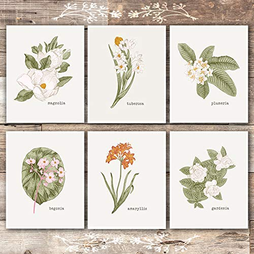 Vintage Botanical Wall Art Prints (Set of 6) - Unframed - 8x10s | Flower Wall Decor - Dream Big Printables