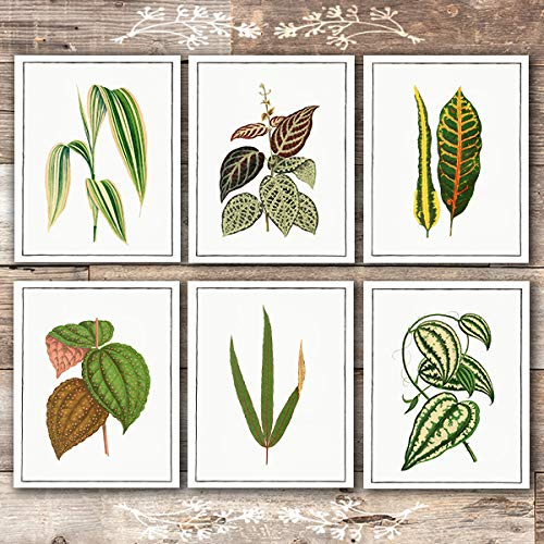 Vintage Foliage Botanical Art Prints (Set of 6) - Unframed - 8x10s - Dream Big Printables