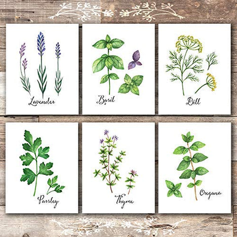 Botanical Prints Kitchen Herbs Wall Art - (Set of 6) - Unframed - 8x10s - Dream Big Printables