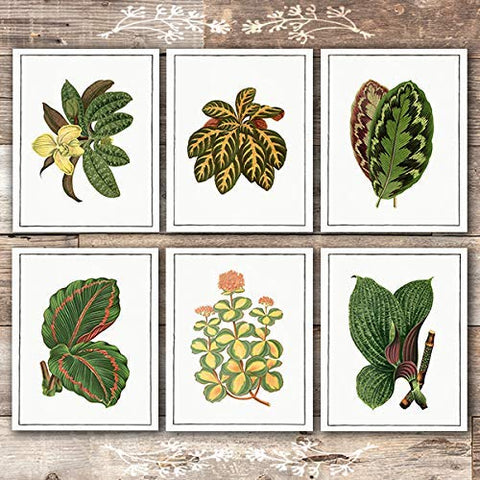Vintage Foliage Botanical Art Prints (Set of 6) - Unframed - 8x10s