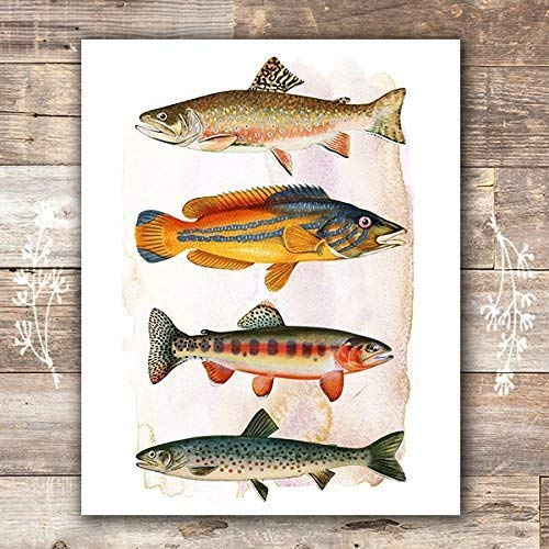 Vintage Fish Art Print - Unframed - 8x10 - Dream Big Printables