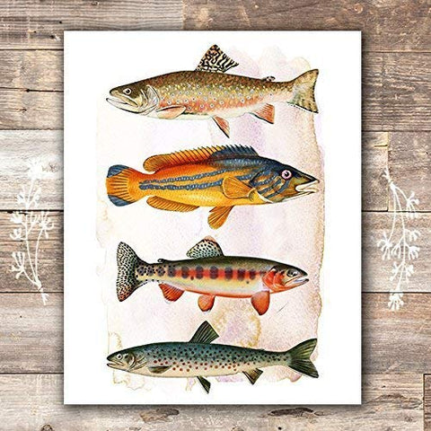 Vintage Fish Art Print - Unframed - 8x10