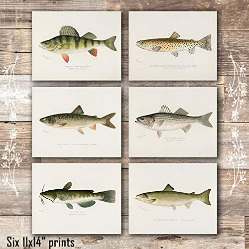 Fish Wall Art Prints (Set of 6) - Unframed - 11x14s - Dream Big Printables