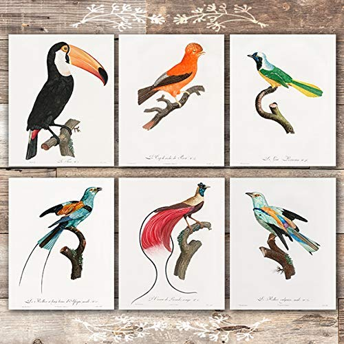 Vintage Birds of Paradise Art Prints (Set of 6) - Unframed - 8x10s - Dream Big Printables
