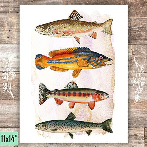Vintage Fish Art Print - Unframed - 11x14 - Dream Big Printables