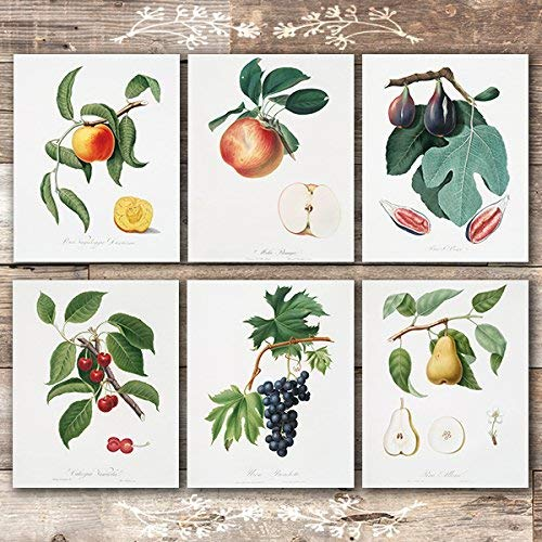 Vintage Fruit Art Prints - Kitchen Botanical Prints - (Set of 6) - Unframed - 8x10s - Dream Big Printables