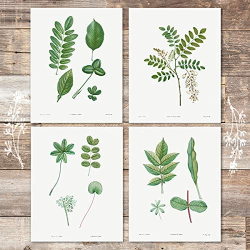 Vintage Green Leaves Wall Art Prints (Set of 4) - Unframed - 8x10s | Botanical Prints - Dream Big Printables