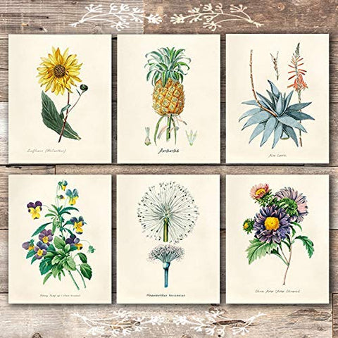 Vintage Botanical Prints Wall Art Prints (Set of 6) - Unframed - 8x10s - Dream Big Printables