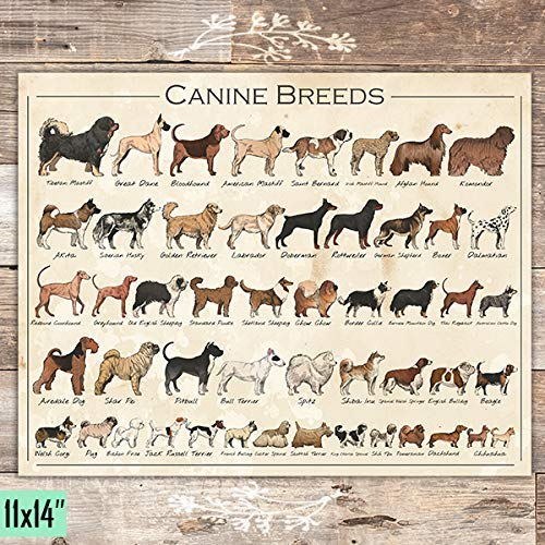 Canine Breeds Dog Art - Unframed - 11x14 - Dream Big Printables