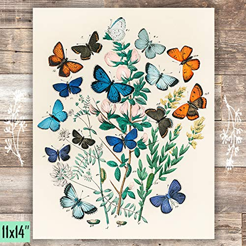 Vintage Butterflies Botanical Art Print - Unframed - 11x14 - Dream Big Printables
