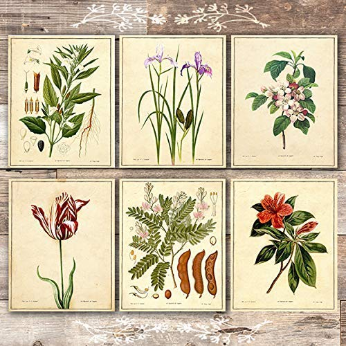 Vintage Botanical Flowers Art Prints (Set of 6) - Unframed - 8x10s - Dream Big Printables