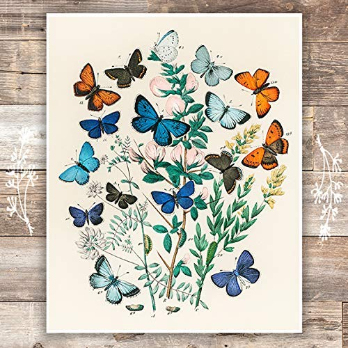 Vintage Butterfly Wall Art Print - Unframed - 8x10 | Botanical Wall Decor - Dream Big Printables