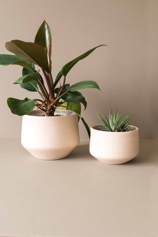 Blush Deco Porcelain Planter - Amy Hamley