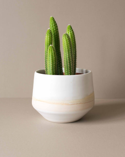 Amy Hamley- Mesa Deco Planter - Large