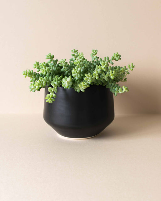 Amy Hamley - Satin Black Deco Planter - Large
