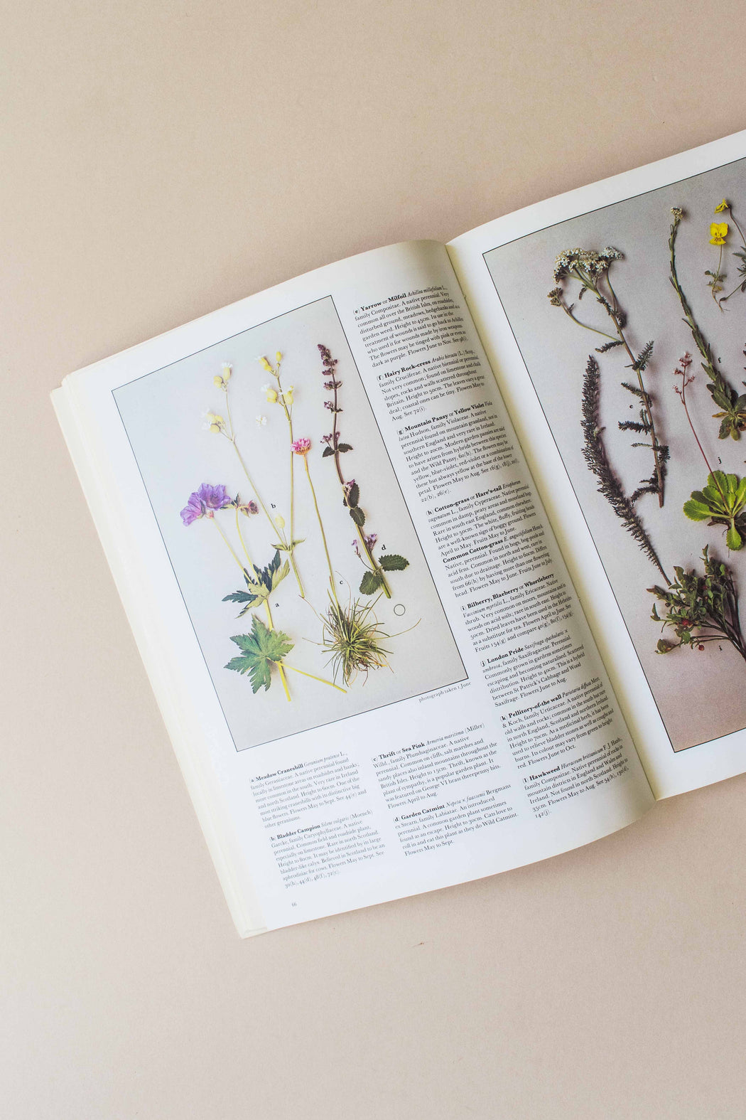 Wild Flowers of Britain Book