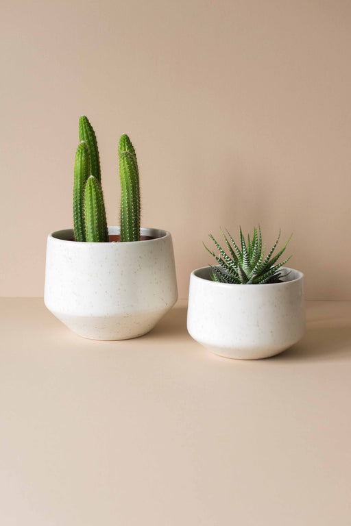 Speckle Deco Porcelain Planter - Amy Hamley