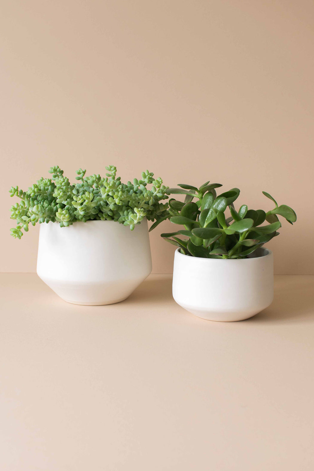 White Deco Porcelain Planter - Amy Hamley