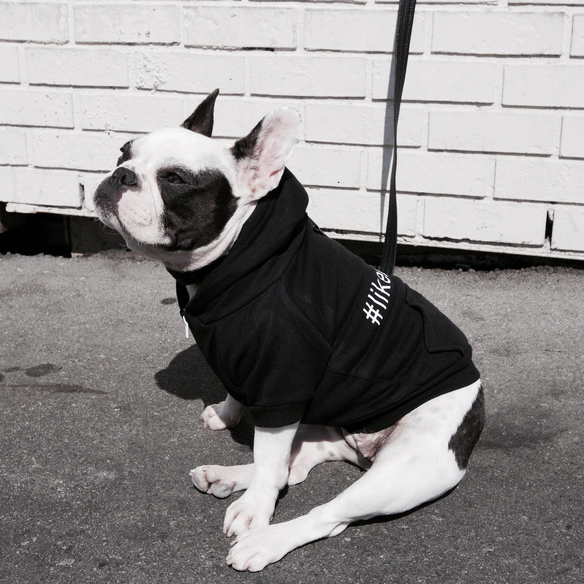 iL CANE - Sass Hoodie 1st Gen. - #LIKEABOSS