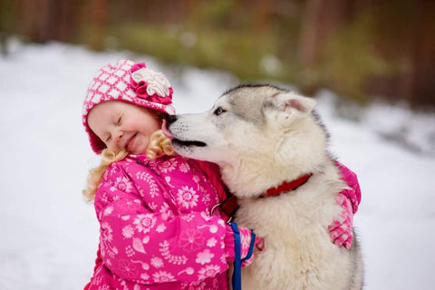 child and dog playing in the snow