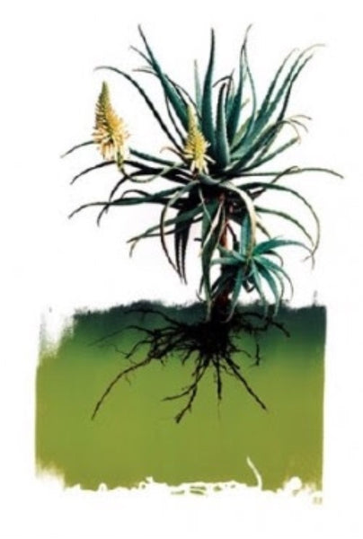 "CLINTON FRIEDMAN ""YELLOW ALOE"" - CANVAS ARTWORK"