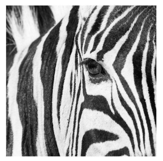 ARTWORK WILD AFRICA - ZEBRA EYE (Square)