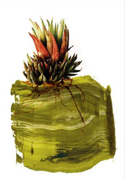 ARTWORK CLINTON FRIEDMAN - SUCCULENT GB06