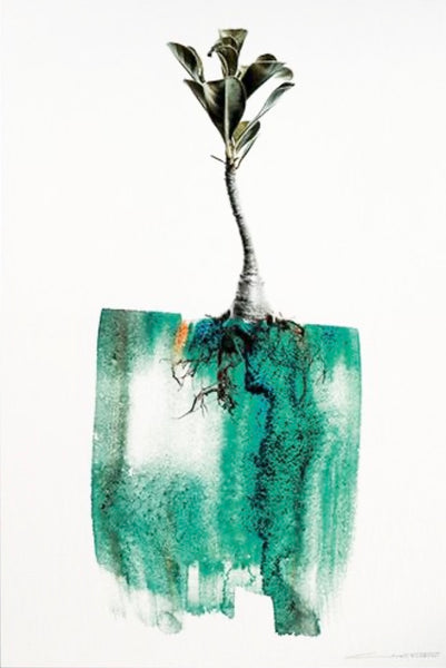 "ARTWORK CLINTON FRIEDMAN ""ADENIUM"" LIMITED EDITION"