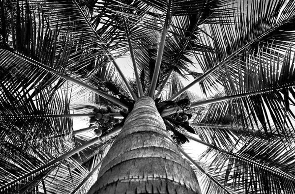 ARTWORK BALLAM H9c - PALM TREE IN MOZAMBIQUE