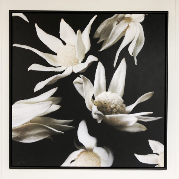 UNIQUE ART FLANNEL FLOWERS