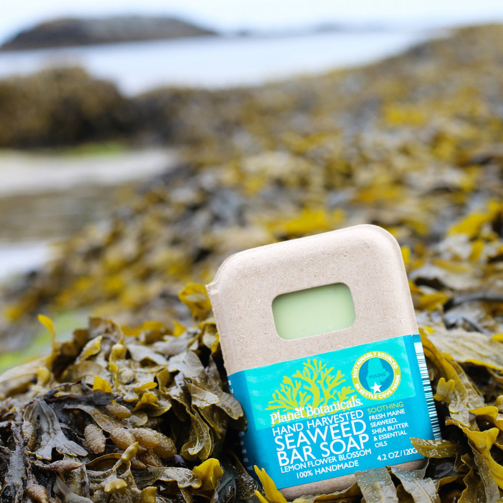 Seaweed Bar Soap, Artisan Made Natural Soap With Seaweed