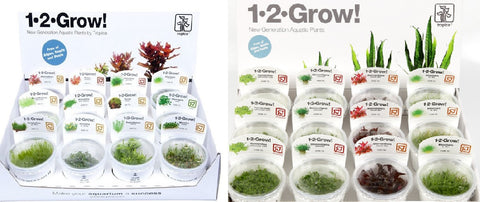 Shipped - Tropica 1-2 Grow  - Orders of 1 Plant